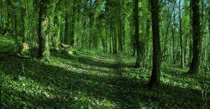 Green woods, Veronica Wilton 2011